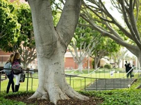 学生社会人シニア大人むけ短期長期語学留学 アメリカカリフォルニア州ロサンゼルスLA 語学学校 American Language Institute ALI カリフォルニア州立大学ロングビーチCSU