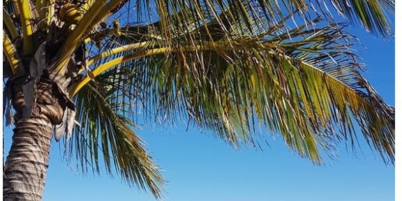 Lexis Sunshine coast