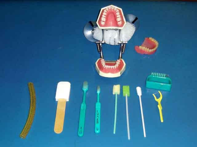 口腔内模型とケア用具