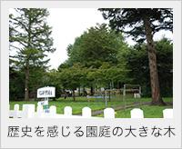 歴史を感じる園庭の大きな木