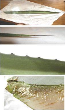 Tonbyan leaf